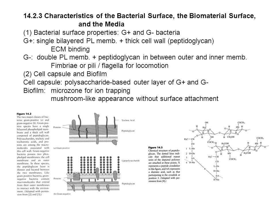 14.2.3 Characteristics of the Bacterial Surface, the Biomaterial Surface,