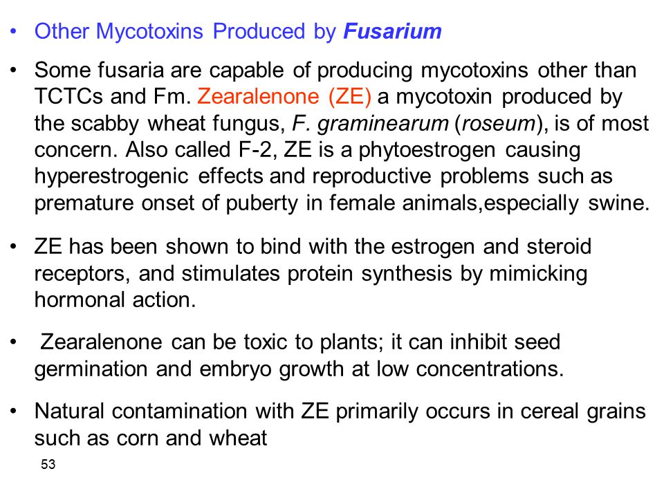 Other Mycotoxins Produced by Fusarium