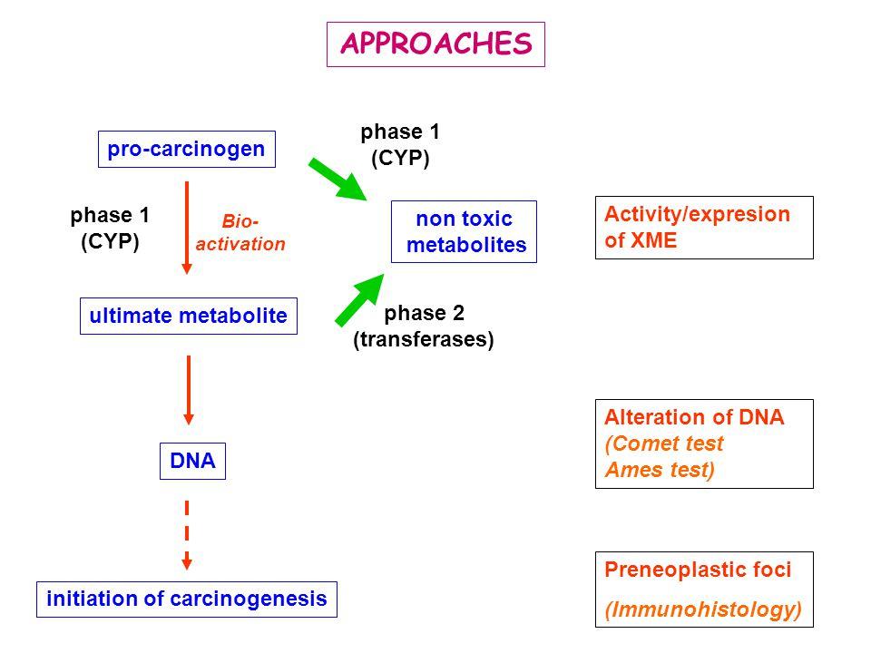 initiation of carcinogenesis