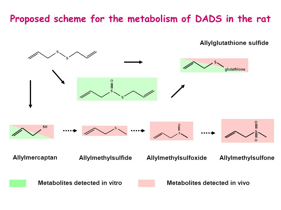 Proposed scheme for the metabolism of DADS in the rat