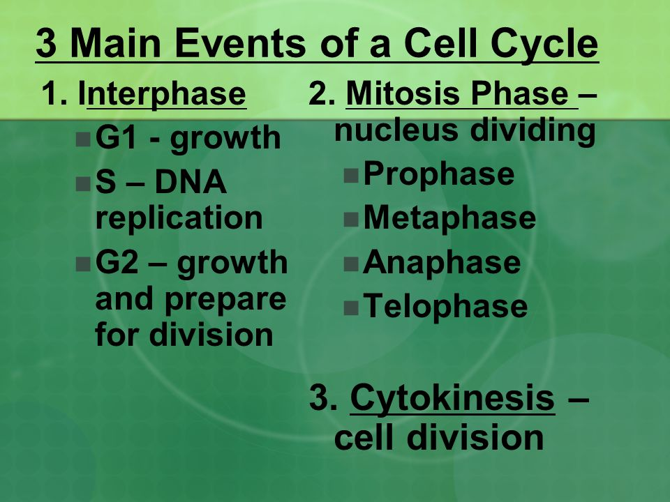 3 Main Events of a Cell Cycle
