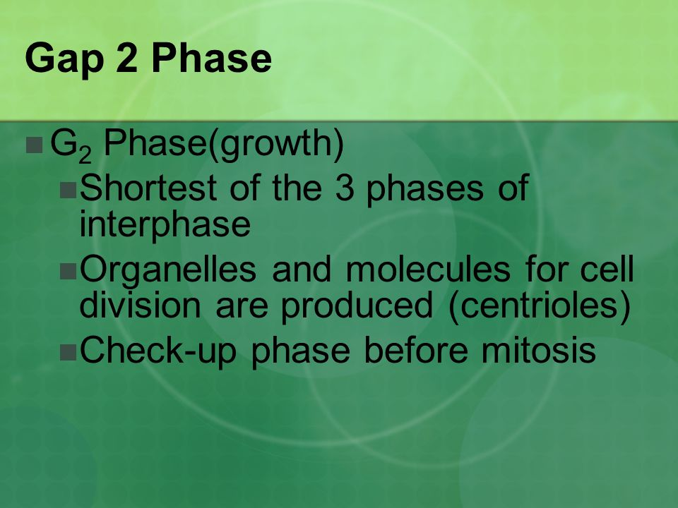 Gap 2 Phase G2 Phase(growth) Shortest of the 3 phases of interphase