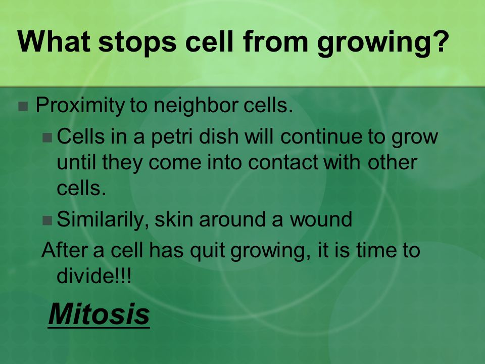 What stops cell from growing