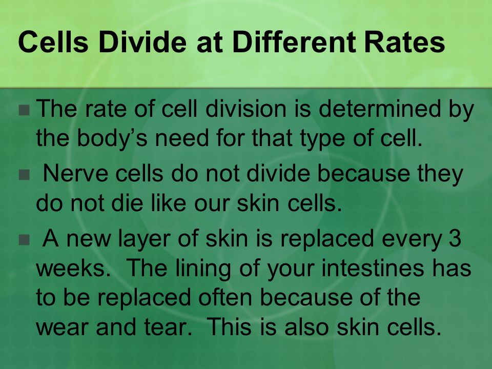 Cells Divide at Different Rates