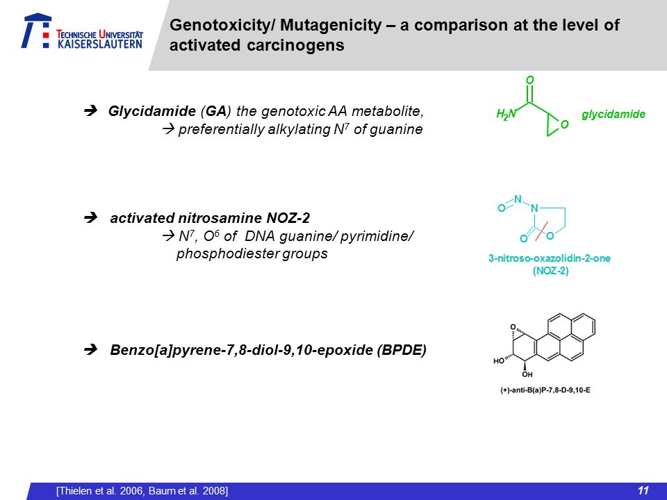 Genotoxicity/ Mutagenicity – a comparison at the level of activated carcinogens