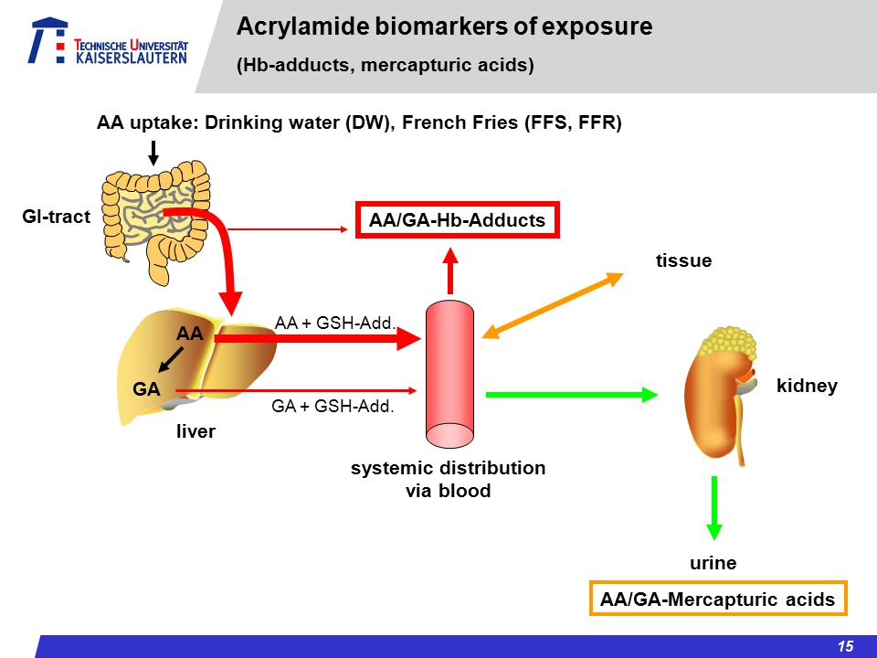systemic distribution AA/GA-Mercapturic acids