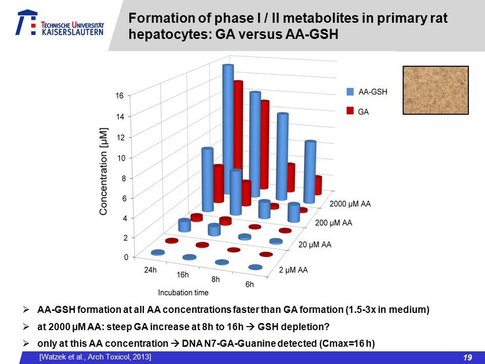 Formation of phase I / II metabolites in primary rat hepatocytes: GA versus AA-GSH