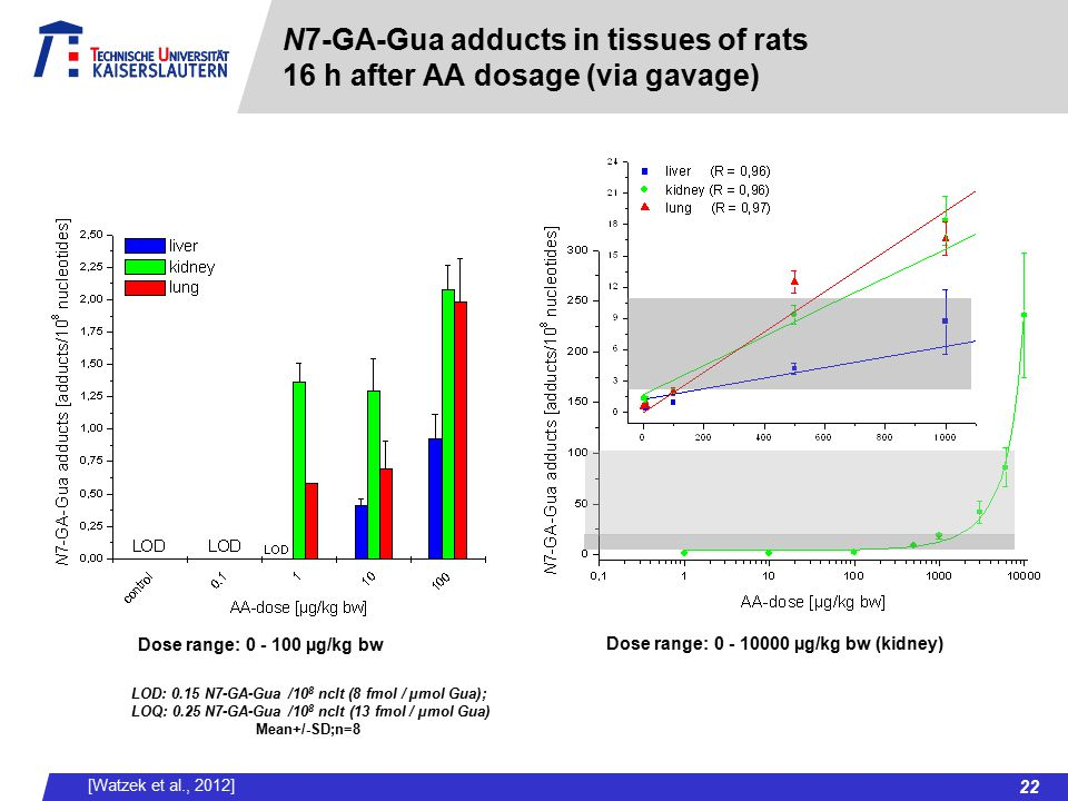 N7-GA-Gua adducts in tissues of rats 16 h after AA dosage (via gavage)