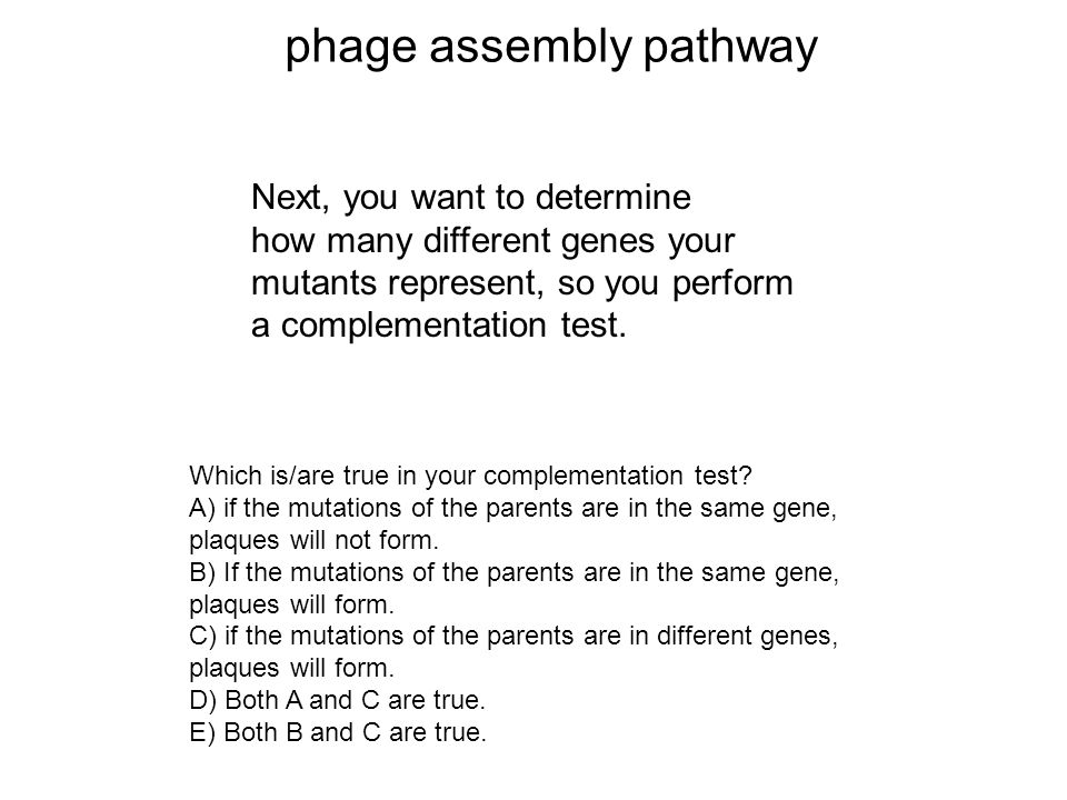 phage assembly pathway