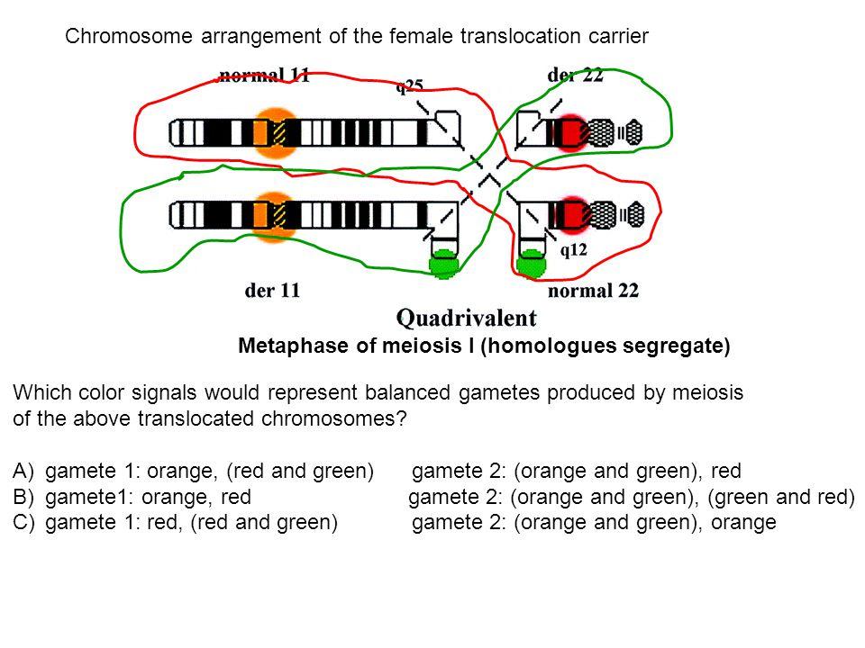Chromosome arrangement of the female translocation carrier