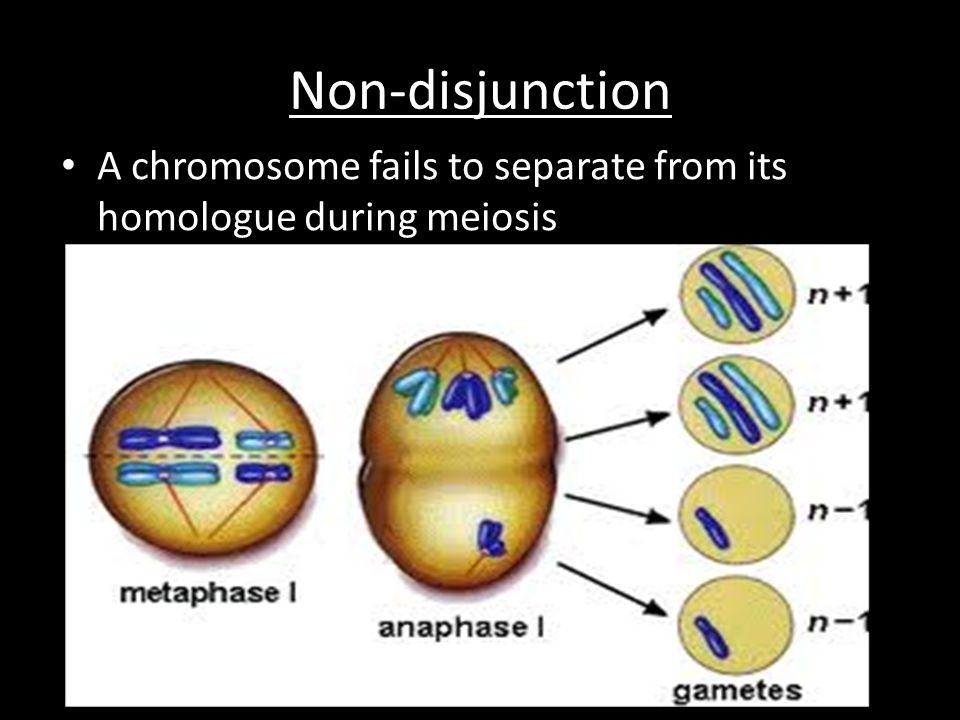 Non-disjunction A chromosome fails to separate from its homologue during meiosis