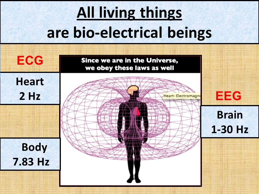 All living things are bio-electrical beings