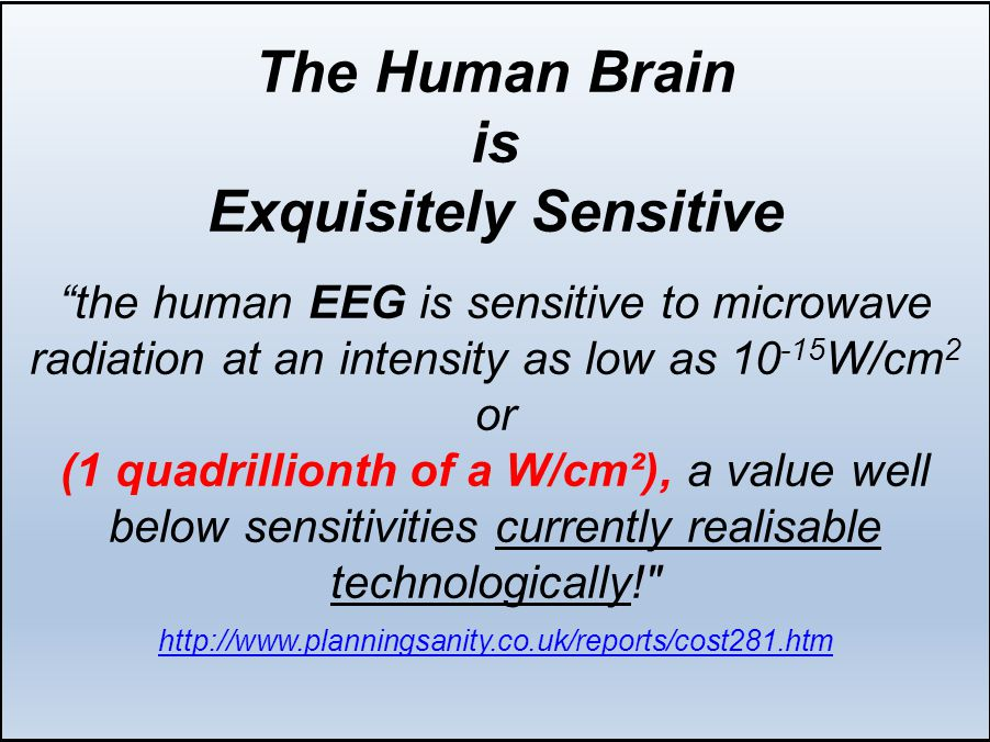 The Human Brain is Exquisitely Sensitive