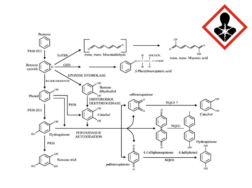Benzene: Toxic Metabolites