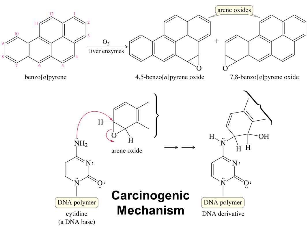 Carcinogenic Mechanism