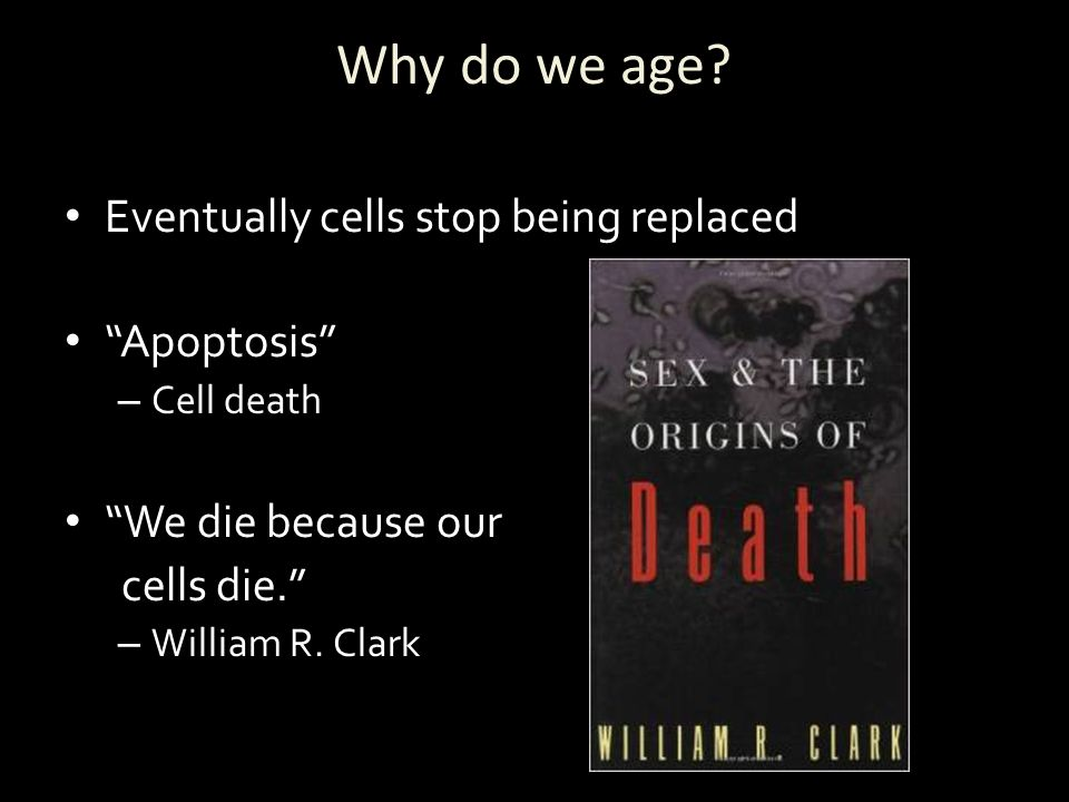 Why do we age Eventually cells stop being replaced Apoptosis