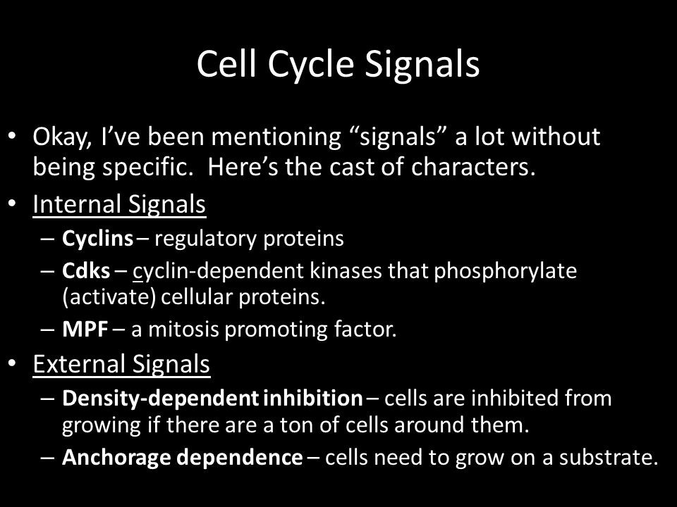 Cell Cycle Signals Okay, I've been mentioning signals a lot without being specific. Here's the cast of characters.