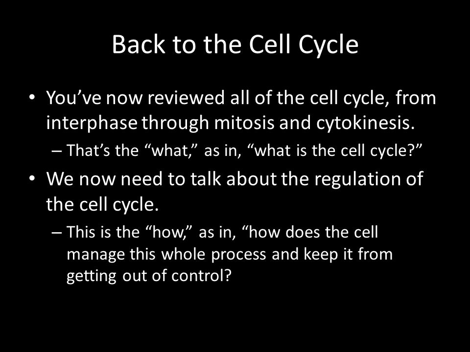 Back to the Cell Cycle You've now reviewed all of the cell cycle, from interphase through mitosis and cytokinesis.