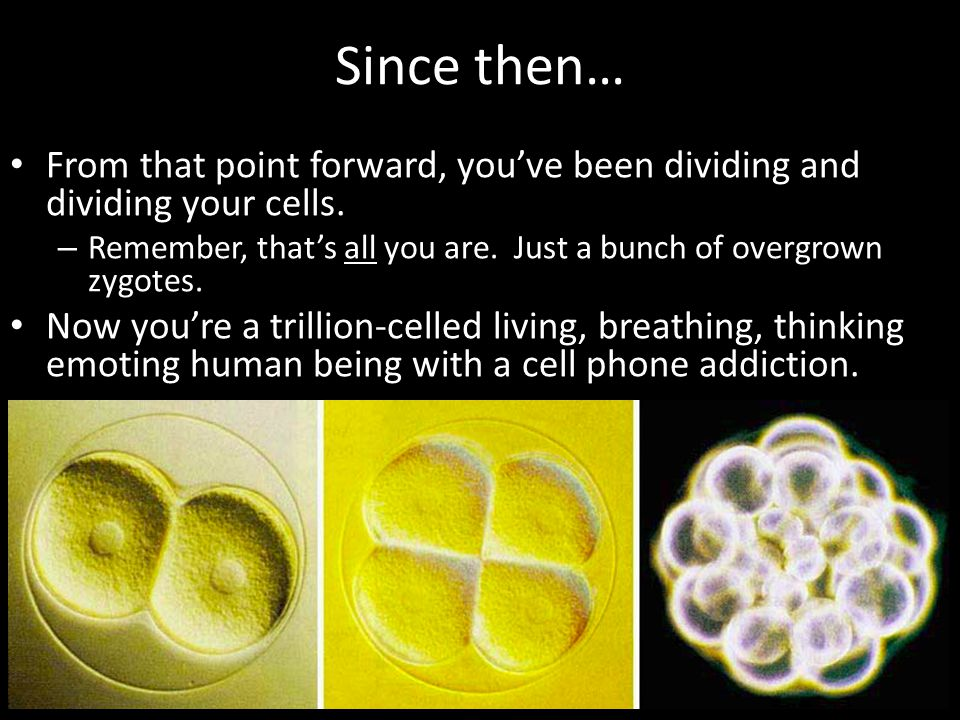 Since then… From that point forward, you've been dividing and dividing your cells. Remember, that's all you are. Just a bunch of overgrown zygotes.