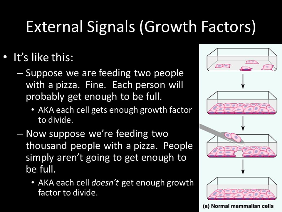 External Signals (Growth Factors)