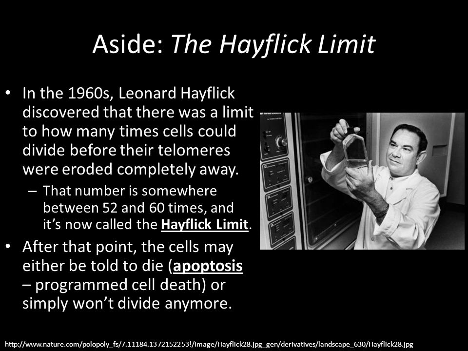 Aside: The Hayflick Limit