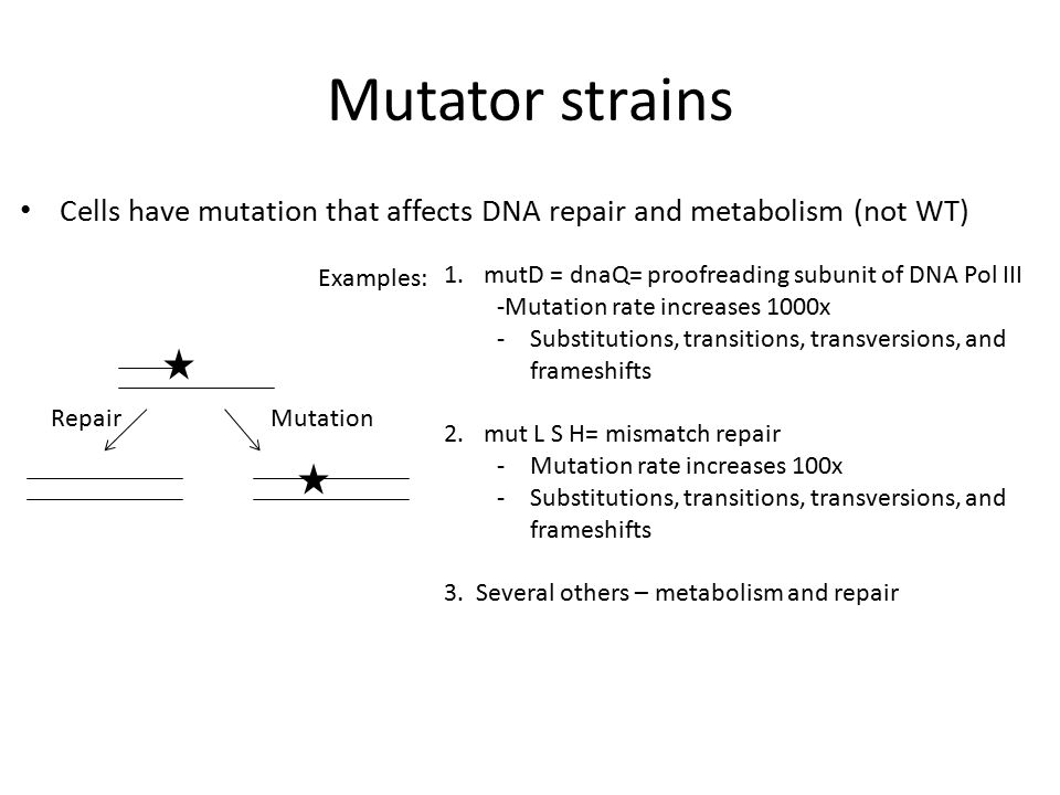Mutator strains Cells have mutation that affects DNA repair and metabolism (not WT) Examples: mutD = dnaQ= proofreading subunit of DNA Pol III.