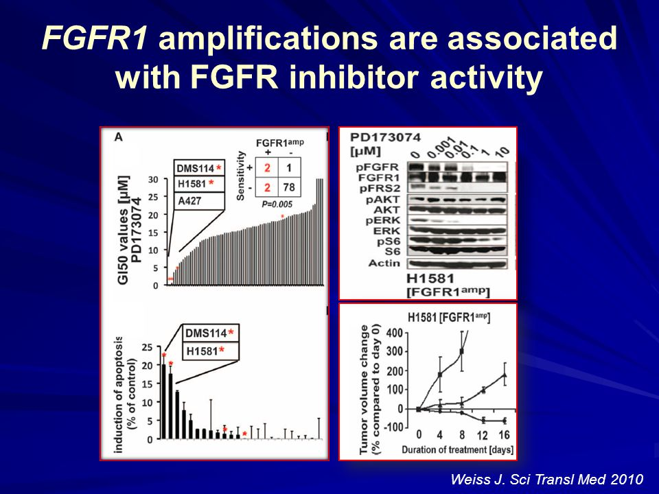 FGFR1 amplifications are associated with FGFR inhibitor activity