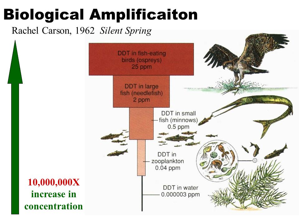 Biological Amplificaiton