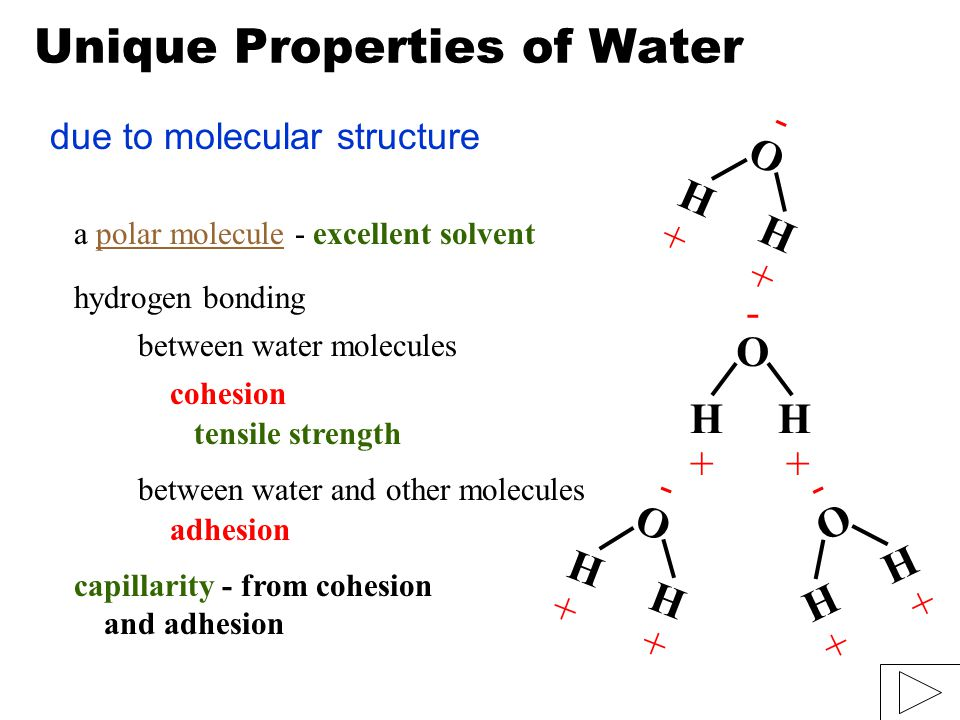 Unique Properties of Water