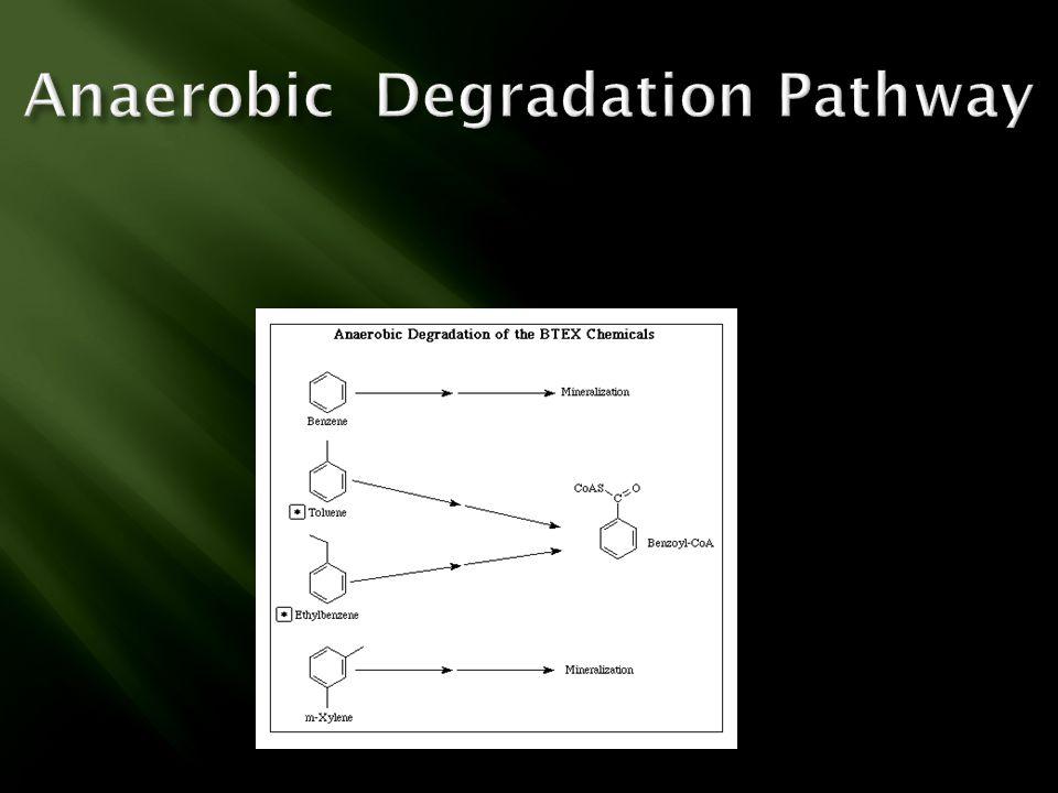 Anaerobic Degradation Pathway