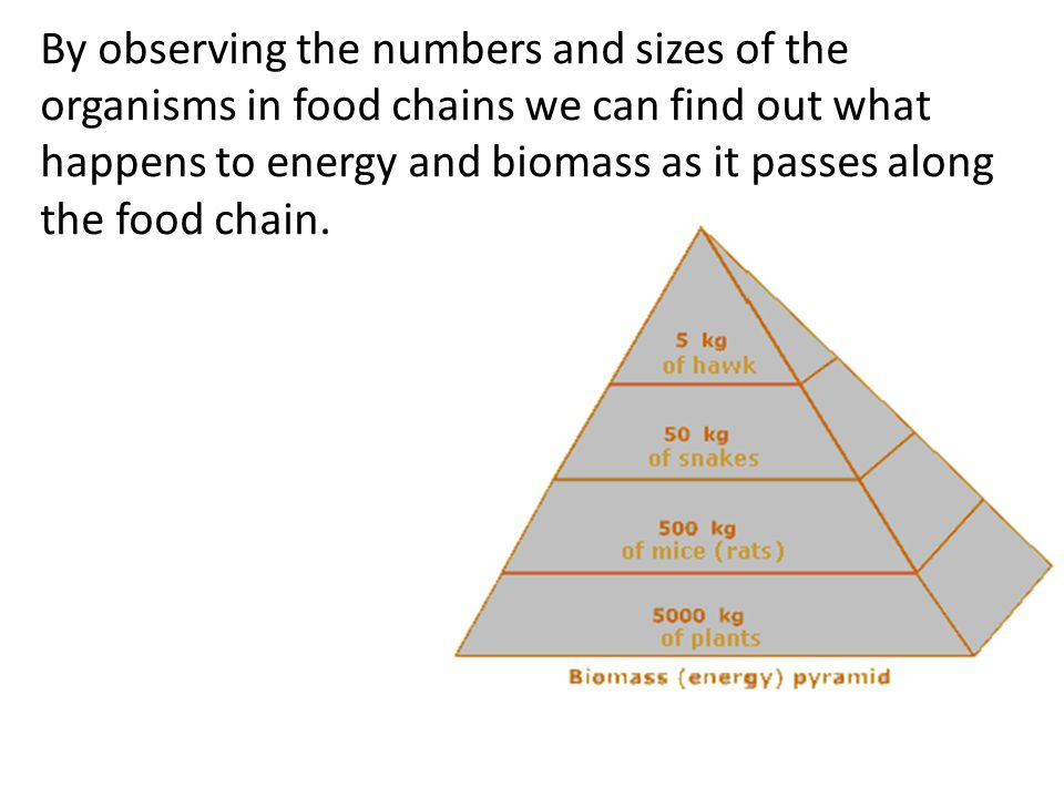 By observing the numbers and sizes of the organisms in food chains we can find out what happens to energy and biomass as it passes along the food chain.