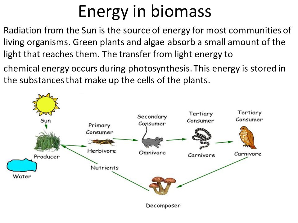 Energy in biomass
