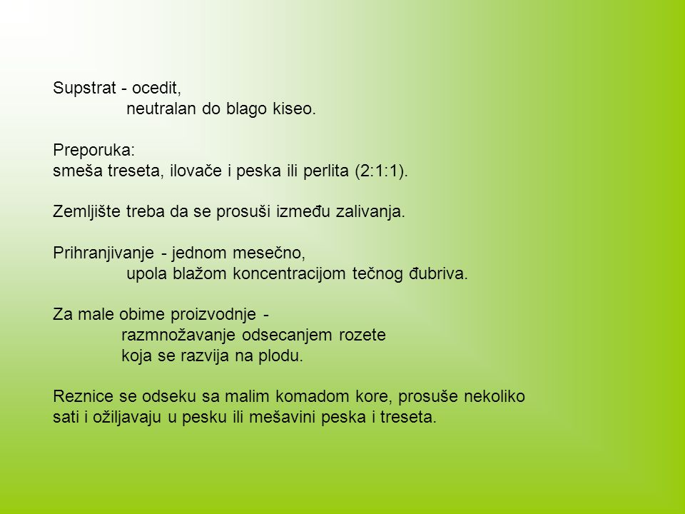 Supstrat - ocedit, neutralan do blago kiseo. Preporuka: smeša treseta, ilovače i peska ili perlita (2:1:1).