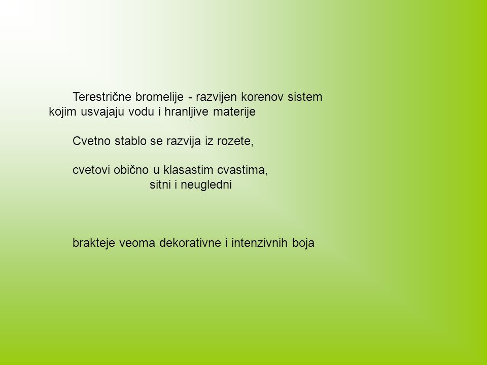 Terestrične bromelije - razvijen korenov sistem kojim usvajaju vodu i hranljive materije