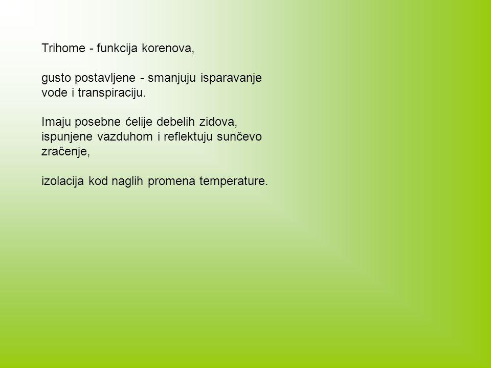 Trihome - funkcija korenova,