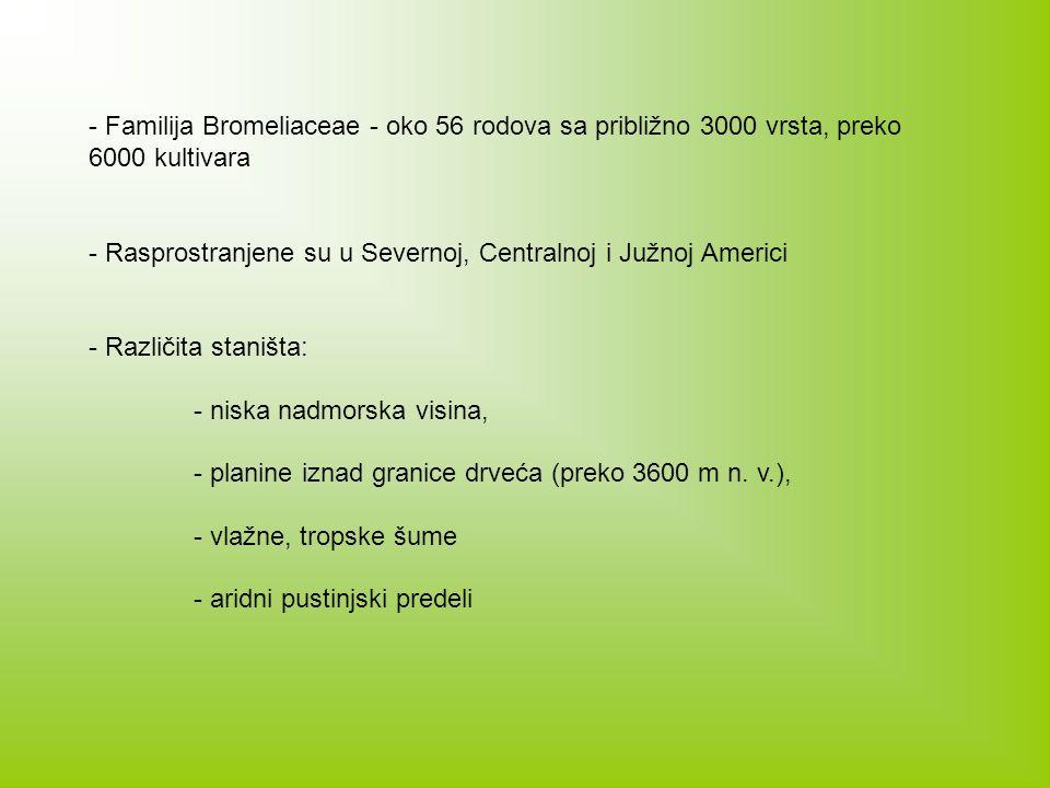- Familija Bromeliaceae - oko 56 rodova sa približno 3000 vrsta, preko 6000 kultivara