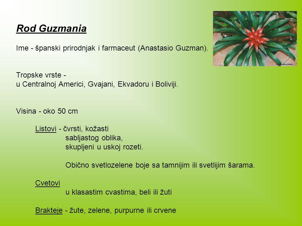 Rod Guzmania Ime - španski prirodnjak i farmaceut (Anastasio Guzman).
