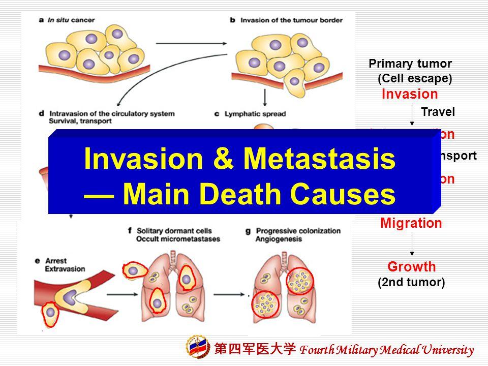 Invasion & Metastasis — Main Death Causes