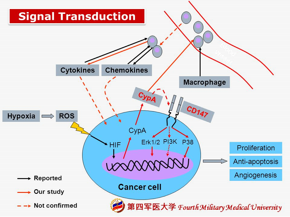 Signal Transduction Cancer cell Blood vessel Cytokines Chemokines