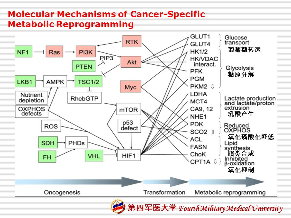 Molecular Mechanisms of Cancer-Specific Metabolic Reprogramming