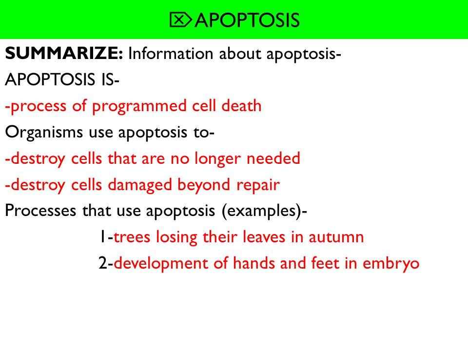 APOPTOSIS SUMMARIZE: Information about apoptosis- APOPTOSIS IS-