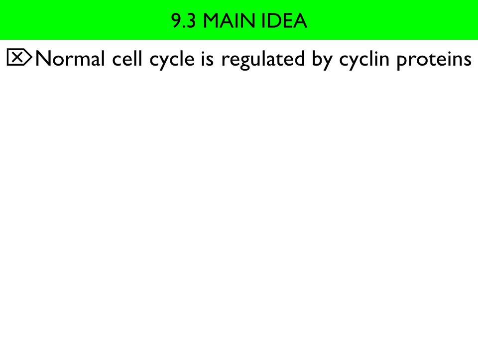 Normal cell cycle is regulated by cyclin proteins