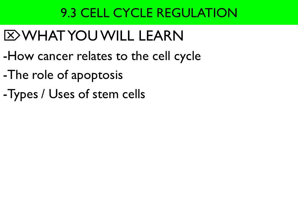 WHAT YOU WILL LEARN 9.3 CELL CYCLE REGULATION