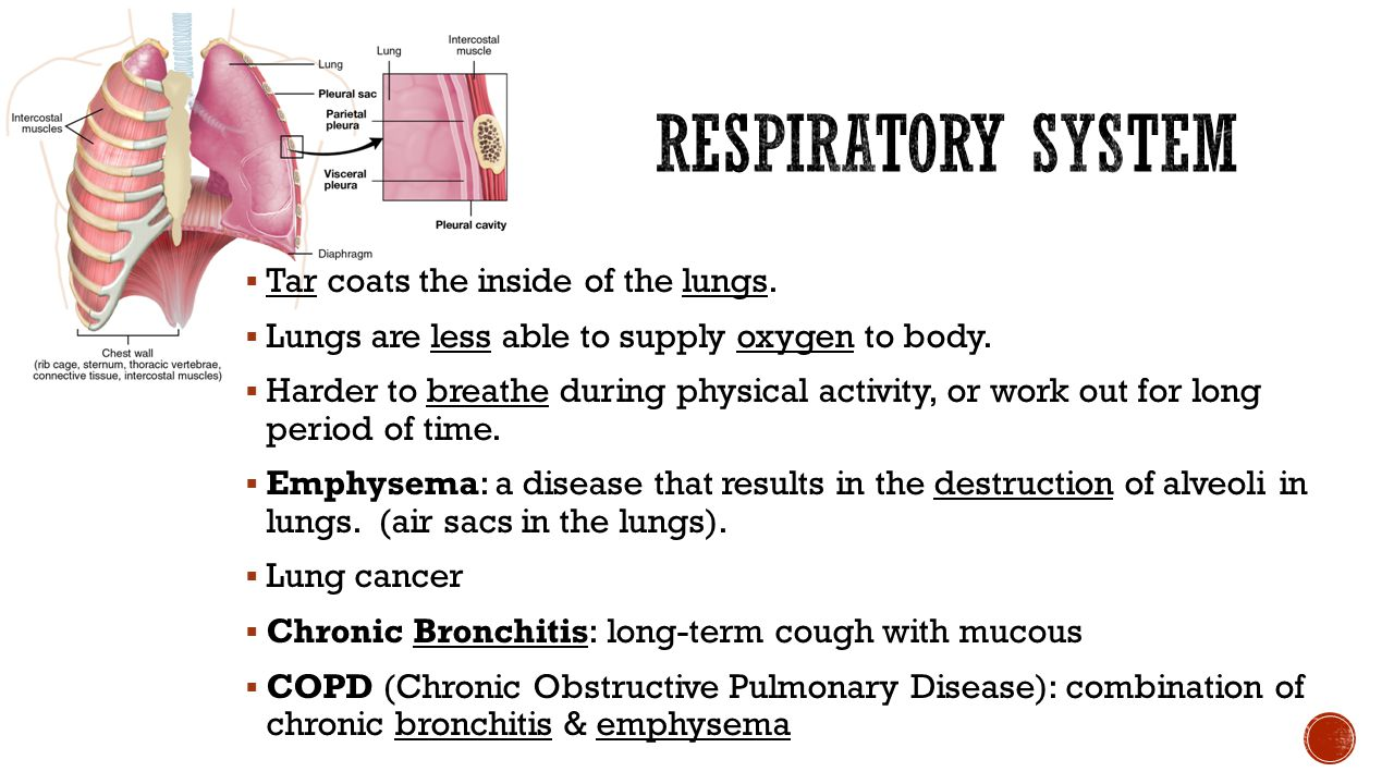 Respiratory System Tar coats the inside of the lungs.