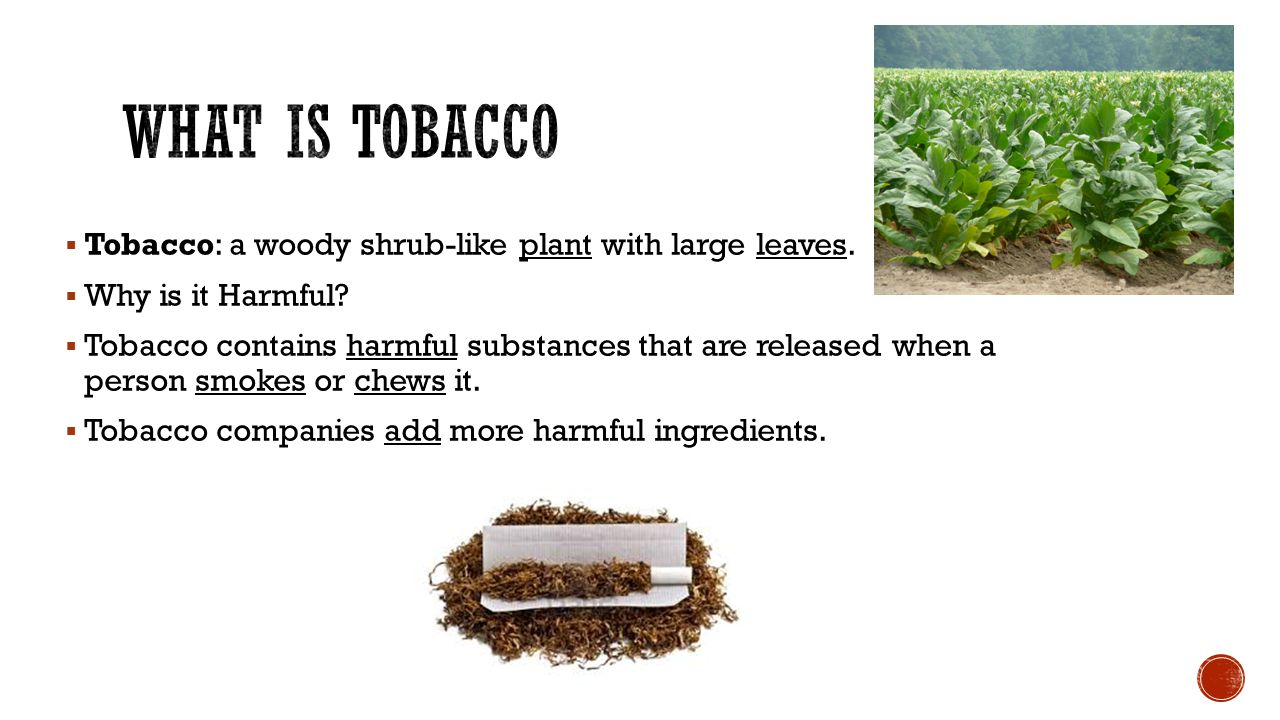 What is Tobacco Tobacco: a woody shrub-like plant with large leaves.