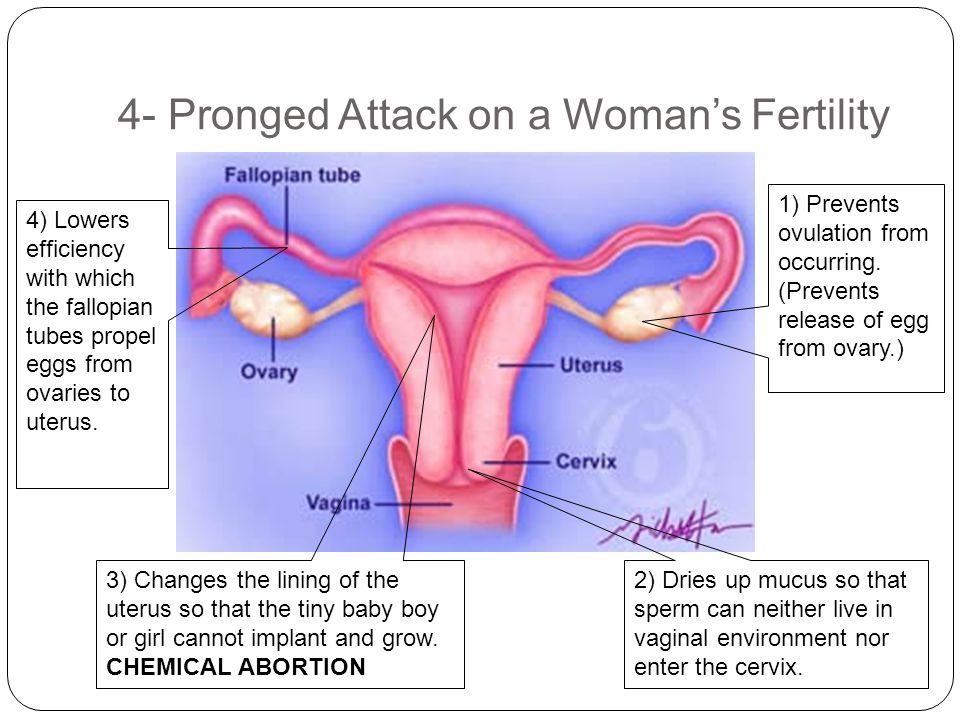 4- Pronged Attack on a Woman's Fertility