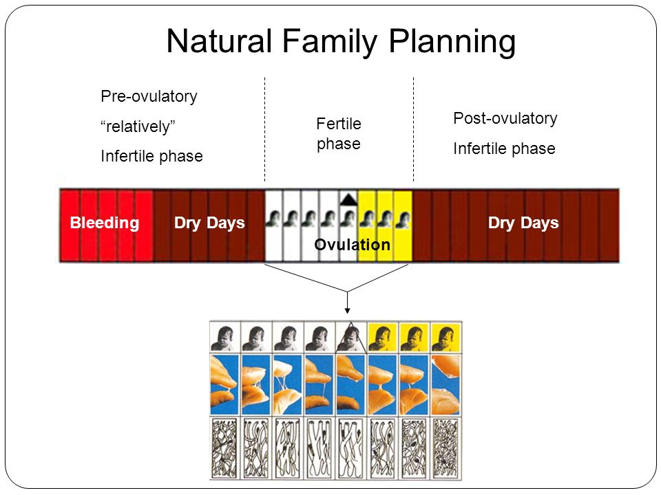 The science behind hormonal contraceptives ppt download Family planning com