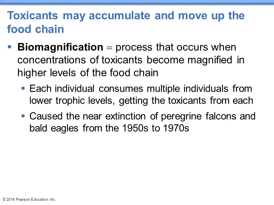 Toxicants may accumulate and move up the food chain