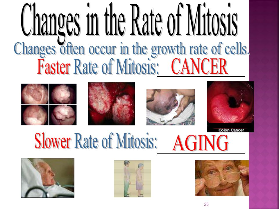 Changes in the Rate of Mitosis