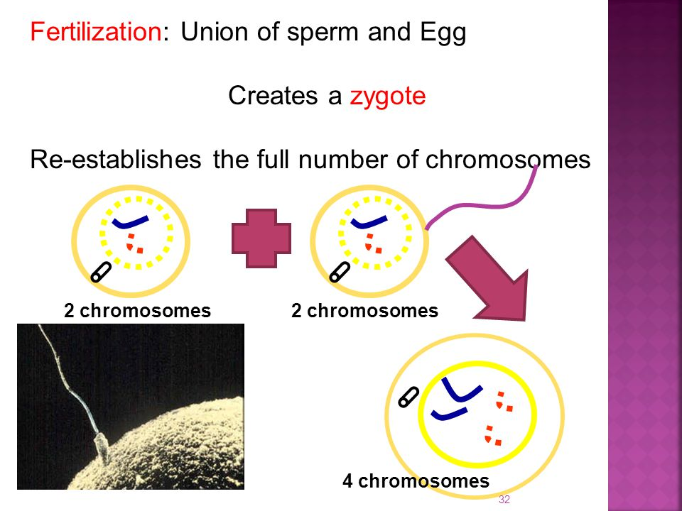 Ch 5 and 6.1 and 6.2 Cell Division. - ppt video online ...